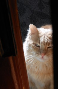 Are you just going to stand there ogling my beauty? Let me in!